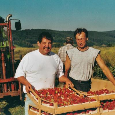 zwei Männer mit Stiegen Erdbeeren auf einem Feld