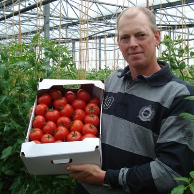 Mann steht in einem Gewächshaus mit einem Karton Tomaten