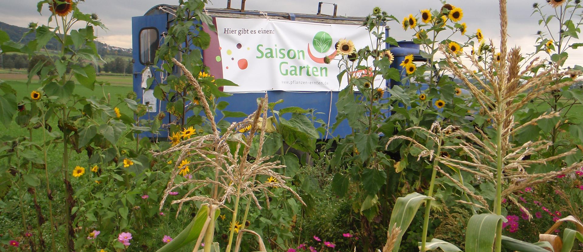 Saisongarten Buseck Mais und Blumen vor Banner