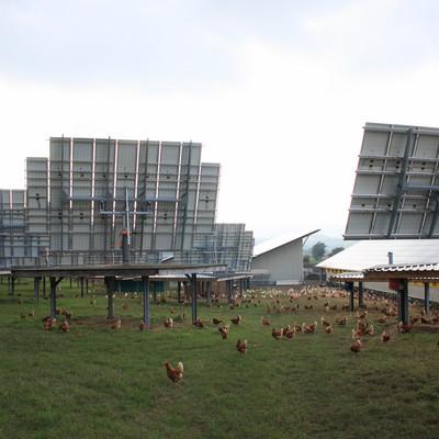 Hühner laufen bei Solaranlagen