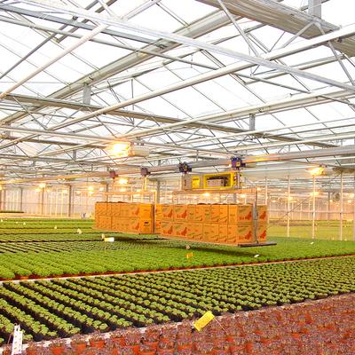 Transportsystem der Kräuterpflanzen im Gewächshaus
