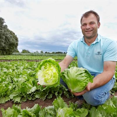 ein Mann kniet auf einem Feld mit zwei Salatköpfen in den Händen
