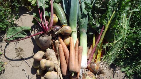 verschiedene Gemüsesorten wie Karotten und Kartoffeln