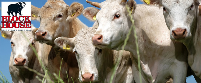 Kühe von Blockhouse