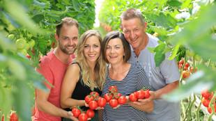 Vier Mitarbeiter und Mitarbeiterinnen stehen zwischen zwei Tomatenpflanzreihen, jeder hält eine Tomatenrispe mit reifen roten Früchten in der Hand