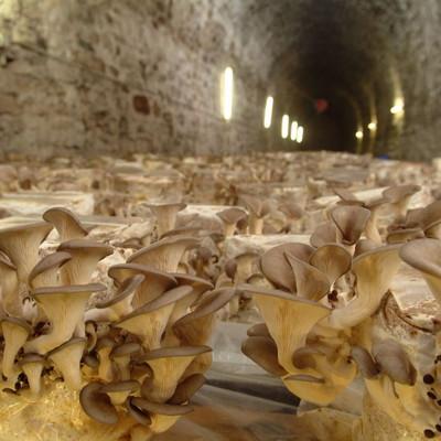Tunnel mit Pilzen