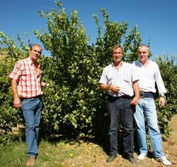 Brüder Montoya Martinez auf einer Plantage in Spanien