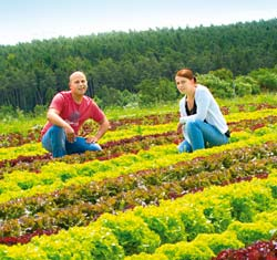 Landwirt Maier mit Frau auf einem Salatfeld
