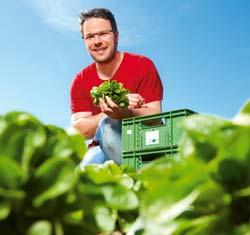 Bauer Stockner auf dem Salatfeld