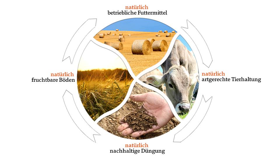 Darstellung ökologischer Kreislauf