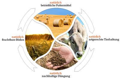 Darstellung der ökologischen Kreislaufwirtschaft