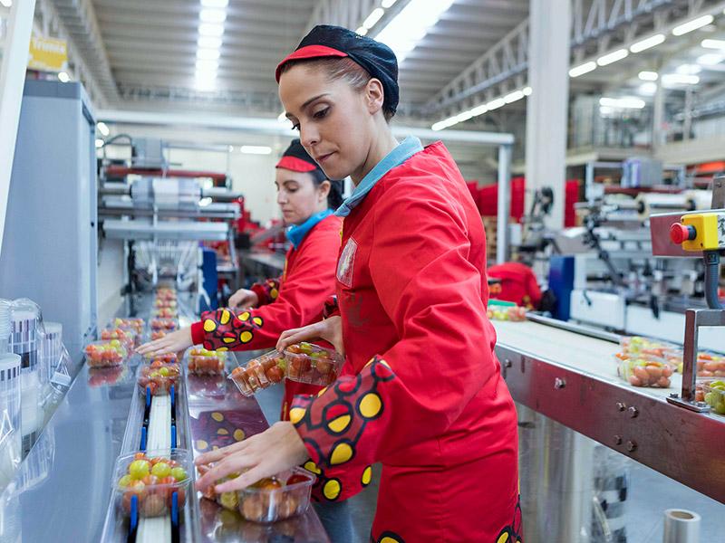 Mitarbeiterinnen füllen Tomaten in Schalen