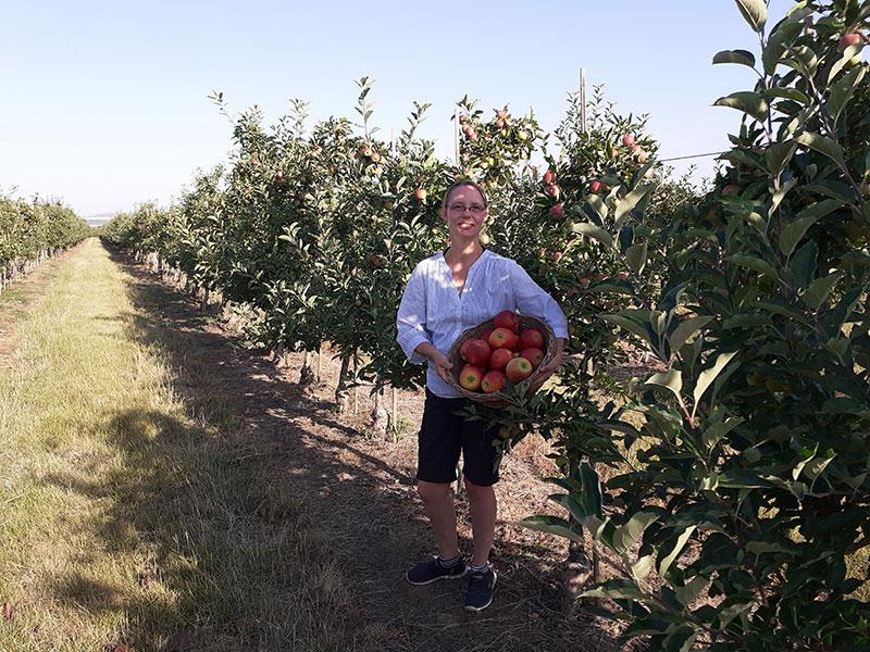 Eine Mitarbeiterin auf der Obstwiese mit einem Korb Äpfel