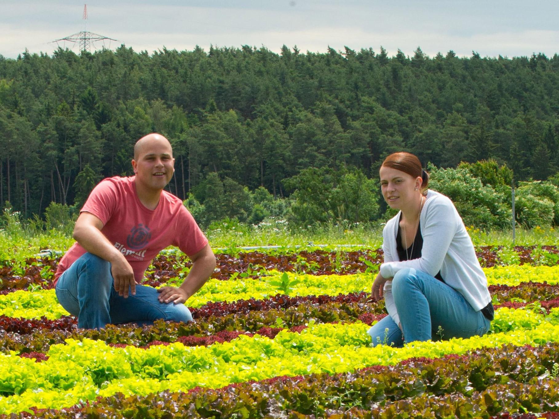 Betriebsleiter und Ehefrau im Salatfeld