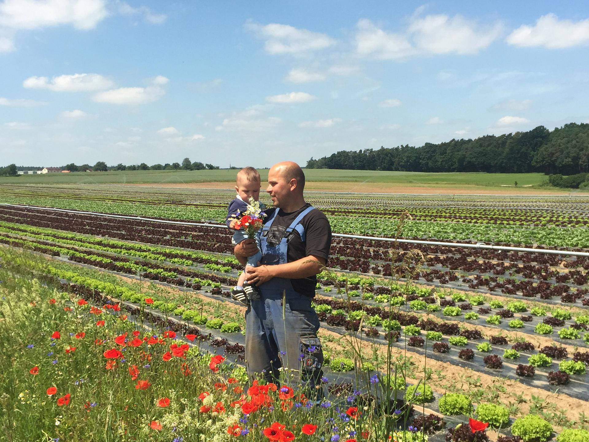 Betriebsleiter und Sohn am Salatfeld