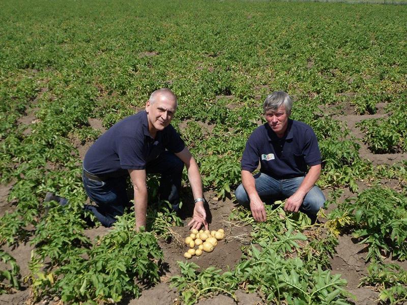 Zwei Männer auf dem Feld mit frisch geernteten Kartoffeln