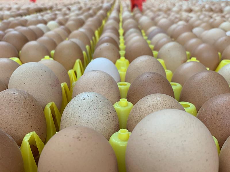 Nahaufnahme von vielen nebeneinander platzierten Eiern
