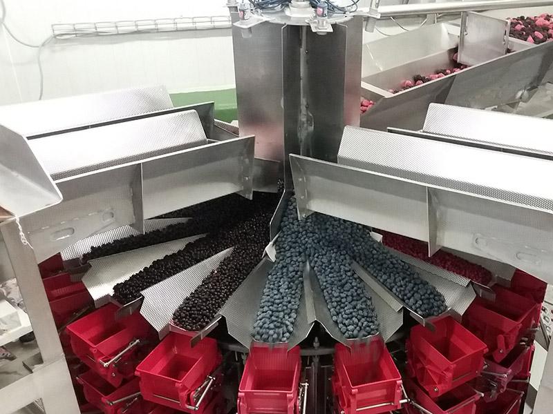Maschine zur Sortierung von Obst