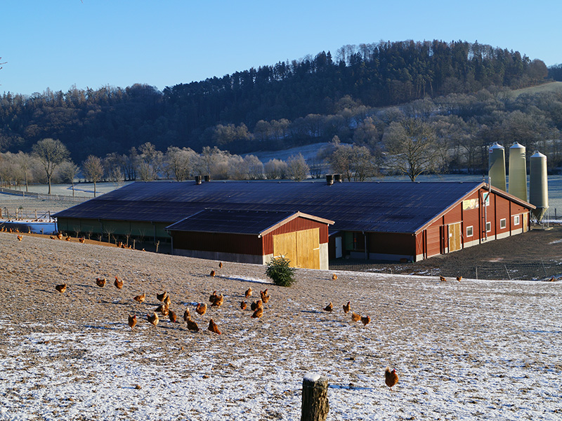 Legehennen Stall mit Hennen im Auslauf