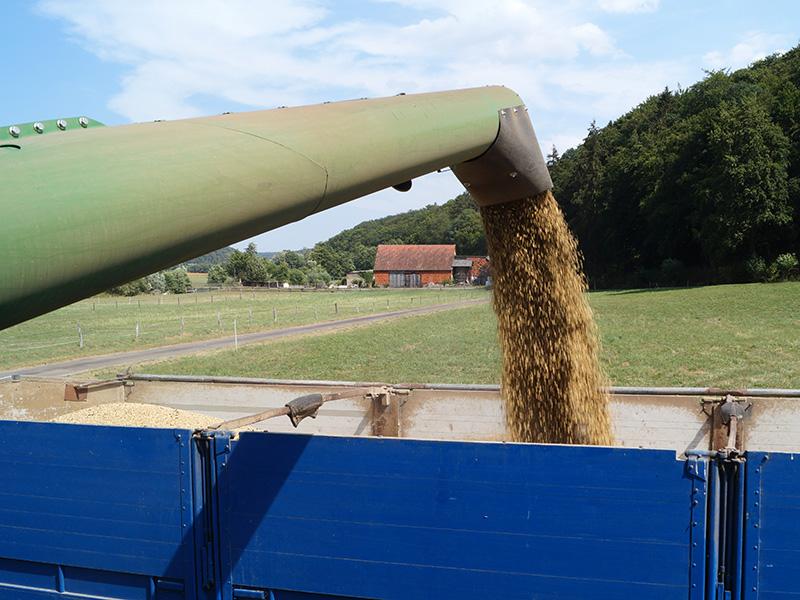 Mähdrescherarm mit Getreide und Anhänger