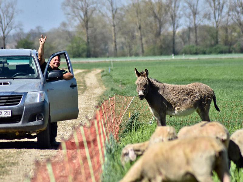 Ein Mitarbeiter im Auto und ein Esel auf der Wiese