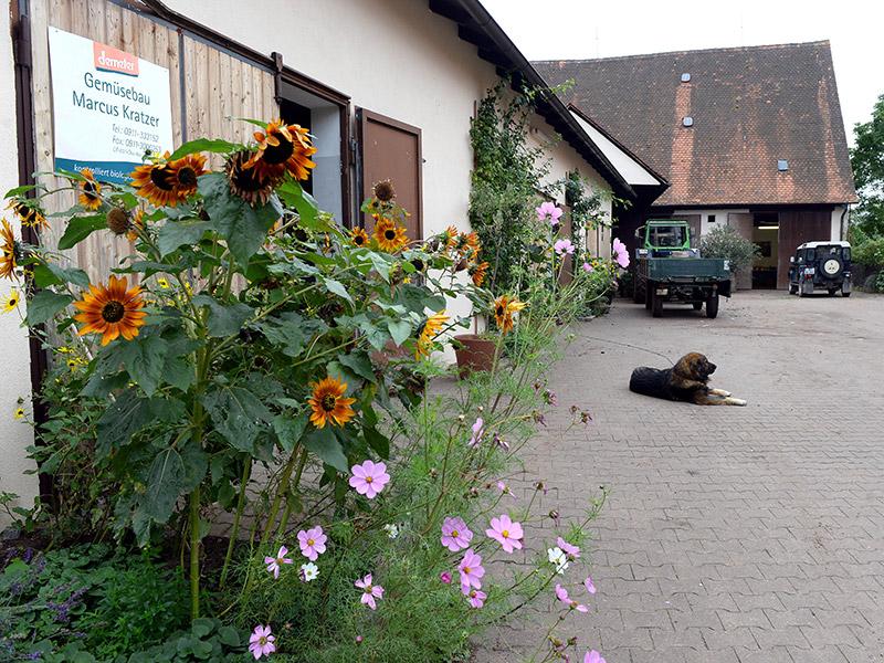 Ein Hund liegt auf dem Boden des Betriebsgeländes, im Vordergrund stehen Sonnenblumen