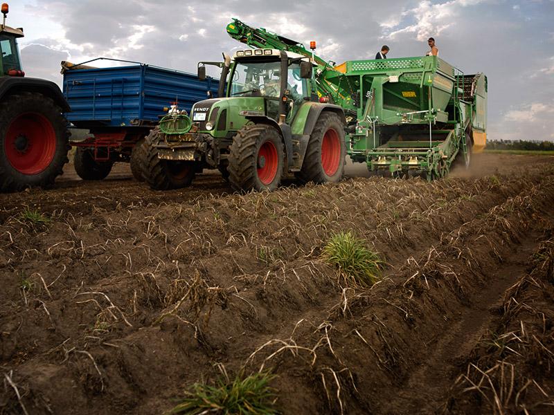 Ein Traktor fährt zur Kartoffelernte über den Acker