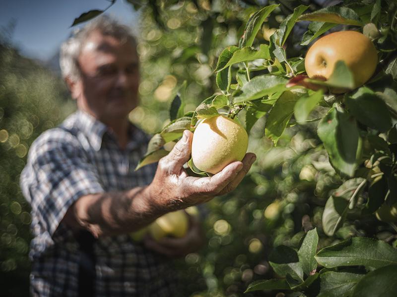 Ein Apfel wird vom Baum gepflückt