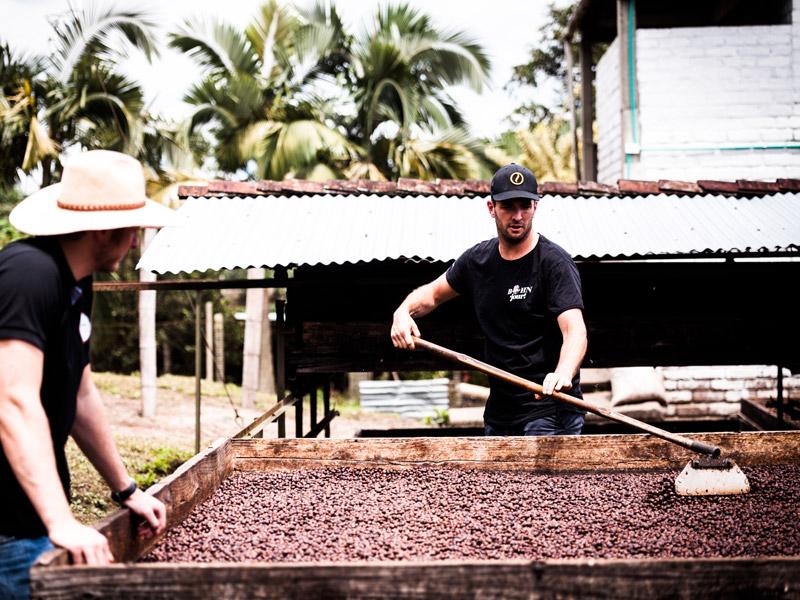 Zwei Männer waschen die rohen Kaffebohnen