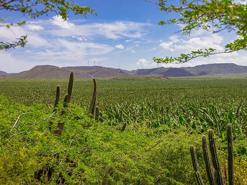 Bananfelder und Kakteen an einem Berg
