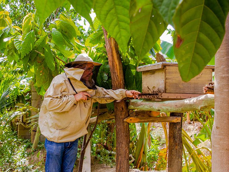 Mann mit Schutzkleidung am Bienenstand