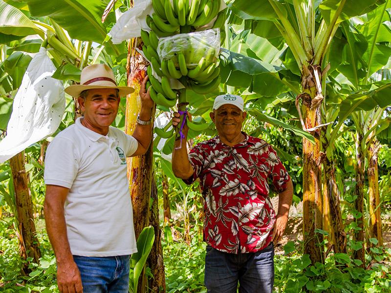zwei Männer an den Bananenplantagen