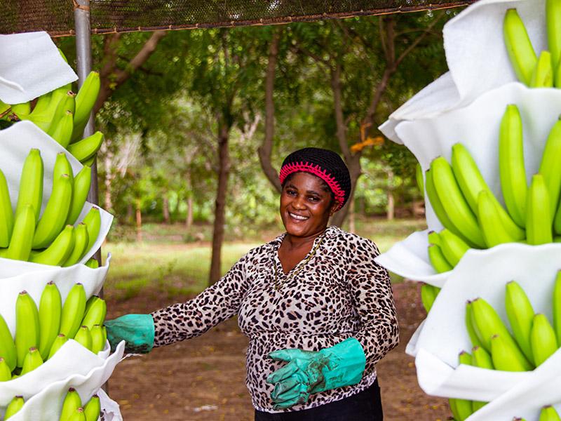Frau beim Bananen abpacken