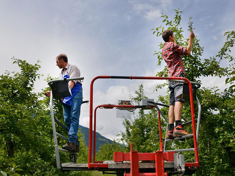 Zwei Mitarbeiter stehen auf einer Hebebühne und begutachten die Bäume einer Apfelplantage
