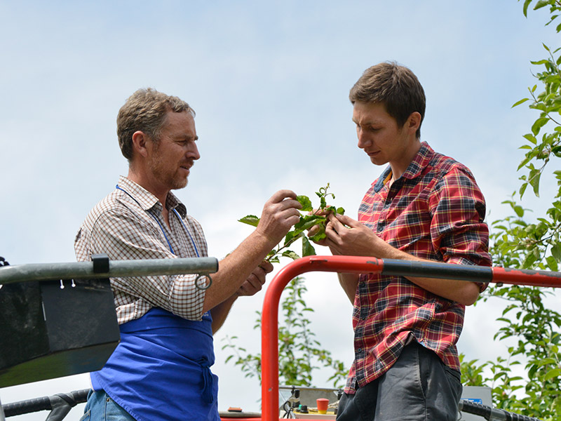 Zwei Mitarbeiter stehen auf einer Hebebühne und kontrollieren die Pflanzengesundheit eines Apfelbaumes