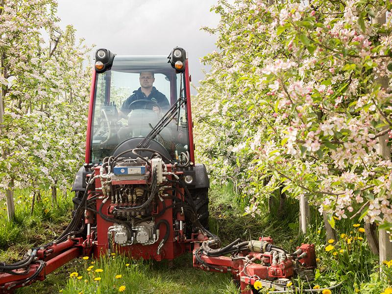 Ein Mann fährt mit einem Mäher durch eine blühende Obstbaumreihe