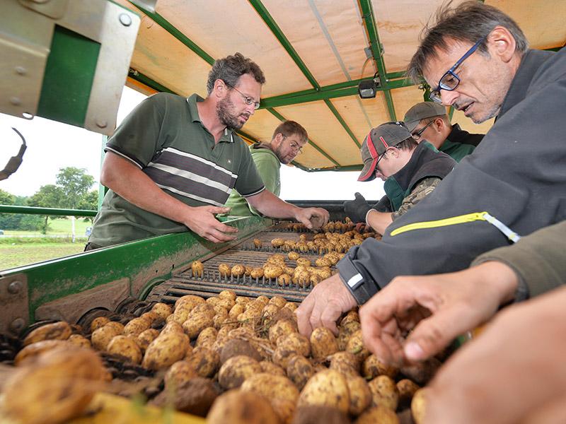 Mitarbeiter auf einem Kartoffelroder