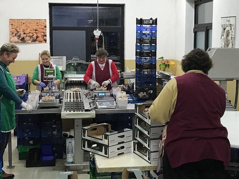 Vier Mitarbeiterinnen wiegen und verpacken Champignons, die über ein Fließband in den Raum gelangen