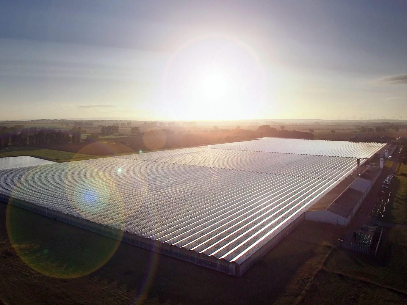 Luftbild des Betriebsgeländes, die langen Gewächshausreihen sind mit Photovoltaik-Zellen abgedeckt