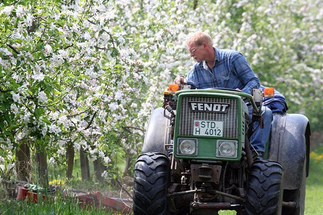 Mitarbeiter mäht auf einem Traktor zwischen den Apfelbaumreihen