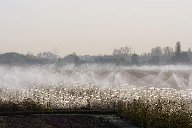Bewässerung der Apfelbaumanlage mit Sprinklern
