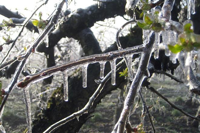 Eiszapfen an einem Baum