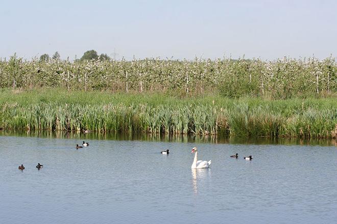 Teich mit Enten und einem Schwan