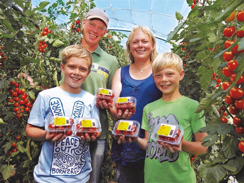 Betriebsfamilie (zwei Erwachsene und zwei Kinder) steht zwischen Tomatenpflanzreihen und hält verpackte Tomaten in den Händen