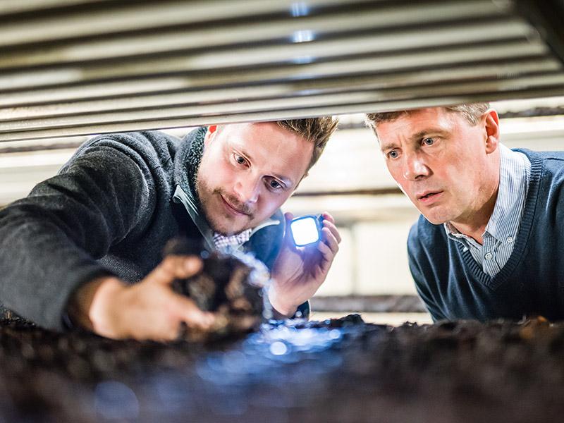 die beiden Betriebsleiter prüfen das Substrat der Pilzzucht