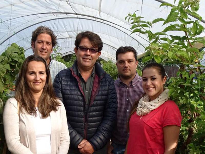 Mitarbeiter und Mitarbeiterinnen zwischen Beerensträuchern im Folientunnel