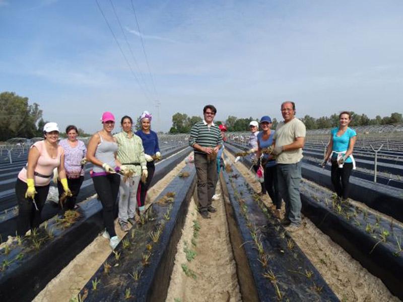 Mitarbeiter und Mitarbeiterinnen vor Pflanzendämmen auf dem Acker