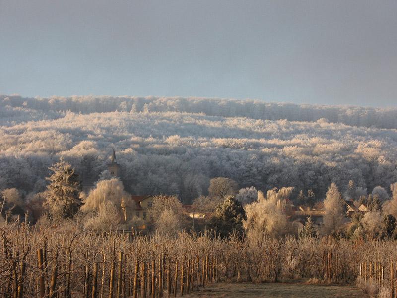 Apfelplantage in der Winterruhe
