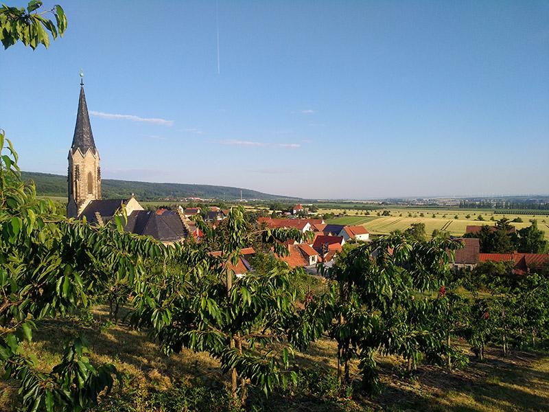 Blick über Kirschbäume zum Kirchturm