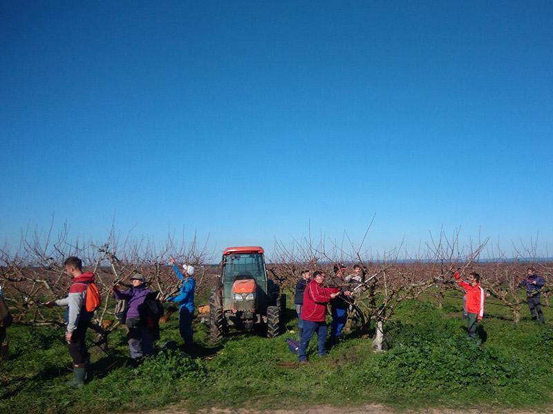 Mitarbeiter versammeln sich um Bäume und begutachten die Äste, in der Mitte steht ein Traktor